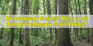 go-mahogany-la-gi-co-tot-khong